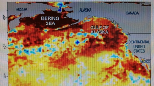 The blob's heat signature on the surface of the Northeast Pacific has diminished over the last six months, but new findings suggest it's sitting deeper below the surface. Photo by NOAA.